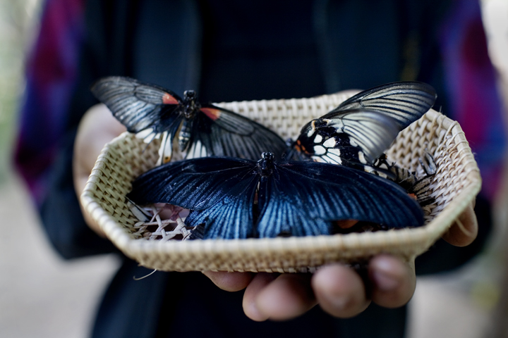 20100412butterflies127
