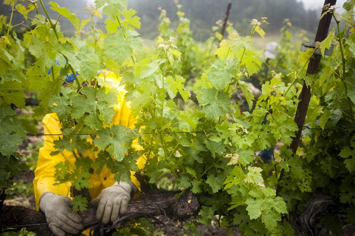 20110525farmworkers335
